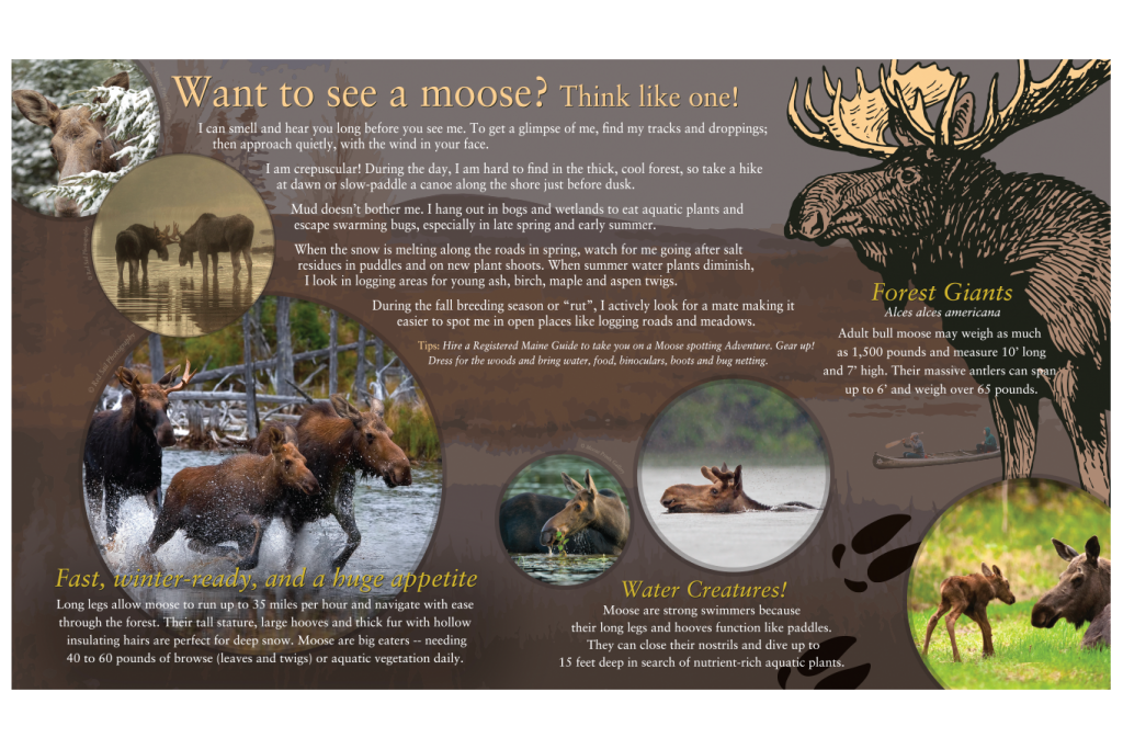 "Interpretive panels ""Want to see a moose""?"